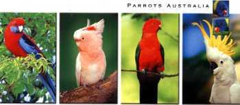 Parrot_4