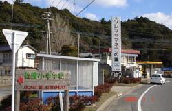 Tsushimayamaneko