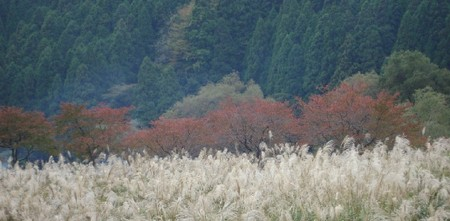 3_colors