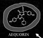 Aequorin