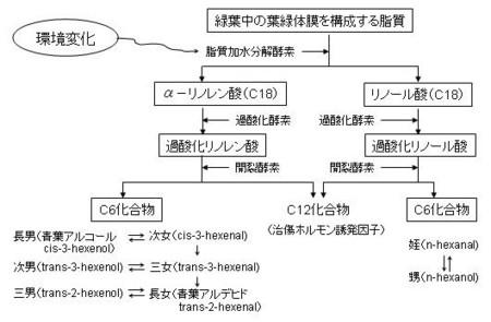 Shikumi_1